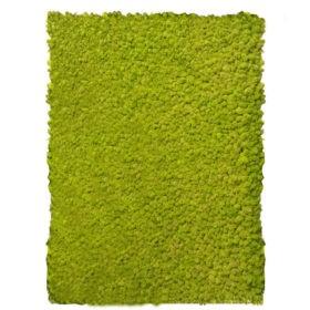 Linfa decor Parete vegetale Lichene nordico naturale